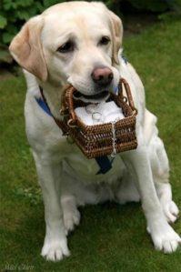 adorable dog ring bearer